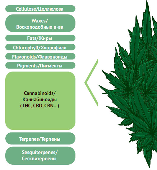 Cannabis Chemical Composition