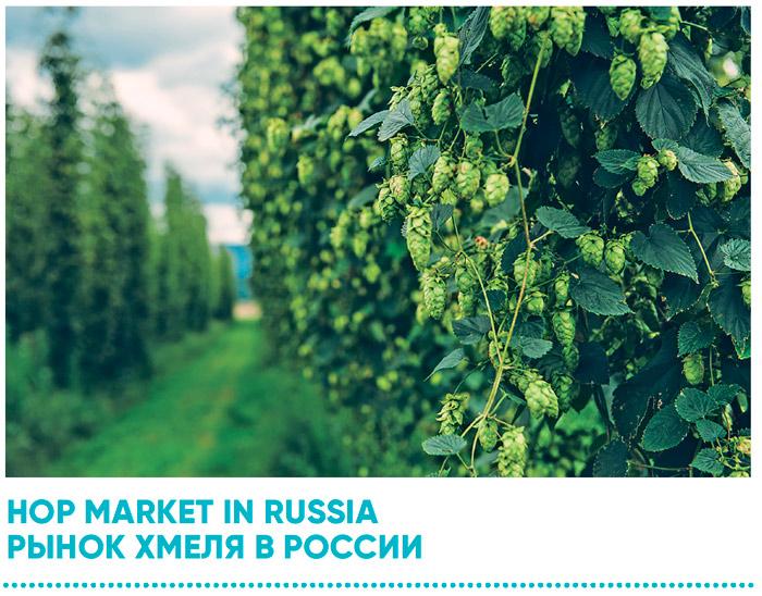 Рынок хмеля в России